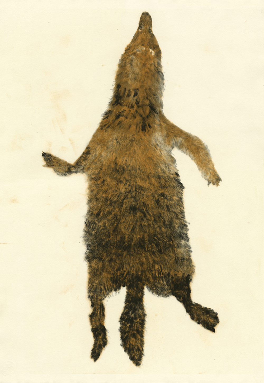 Wolf Pelt - Red catalog.jpg