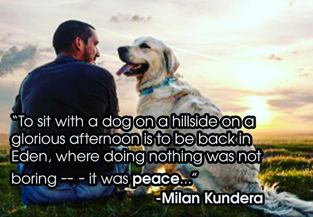 "I believe that when Milan Kundera said, ""Dogs are our link to paradise. They don't know evil or jealousy or discontent. To sit with a dog on a hillside on a glorious afternoon is to be back in Eden, where doing nothing was not boring -- - it was peace,"" he was talking about a Labrador.🐾 . . . . . #dogs #eden #paridise #love #wednesdaywisdom #goodvibes #happy #quotes #instagood #inspirationalquotes #labrador #labsofinstagram #mansbestfriend #womansbest #inspiration #happyplace #entrepreneur #blue #doglover #animal #travel #dogstagram #jocelynkessler"