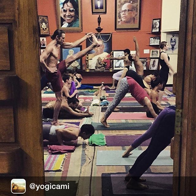 #home Repost: Mysore magic 💓✨🙏 #mysore #kpjayi #ashtanga #ashtangayoga #ashtangayogamethod #grateful #dedication #devotion #determination #gurujiliveshere ✨🙏 photo credit: @harmony_lichty 💓💜🙏✨ ™@yogicami