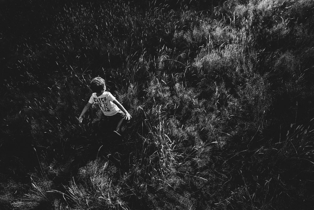 atticus in field-1.jpg