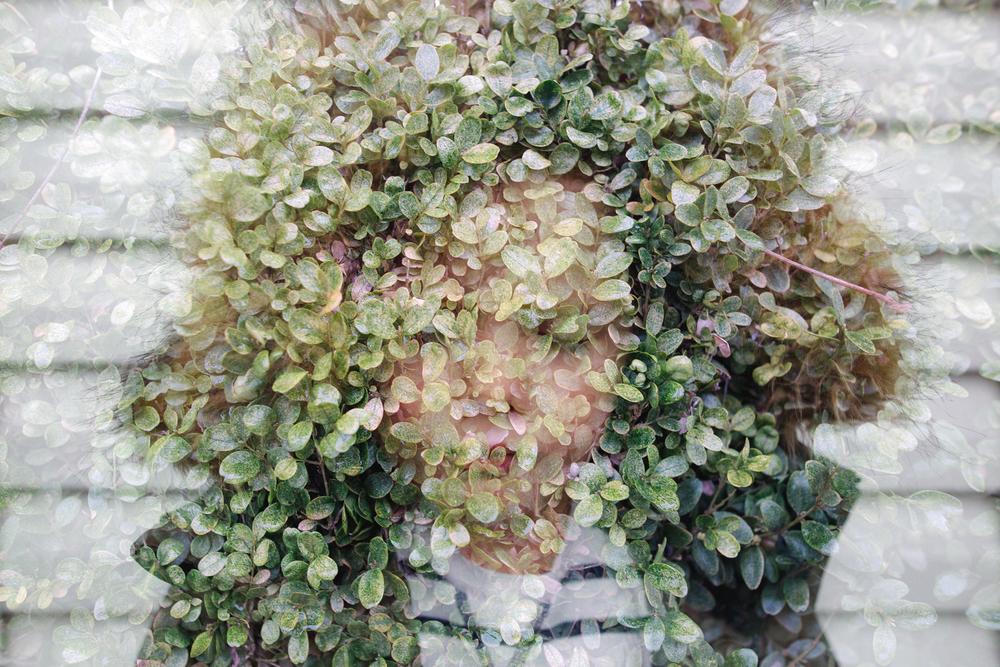 Atticus bush-1.jpg