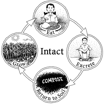 Intact Nutrient Cycle.png