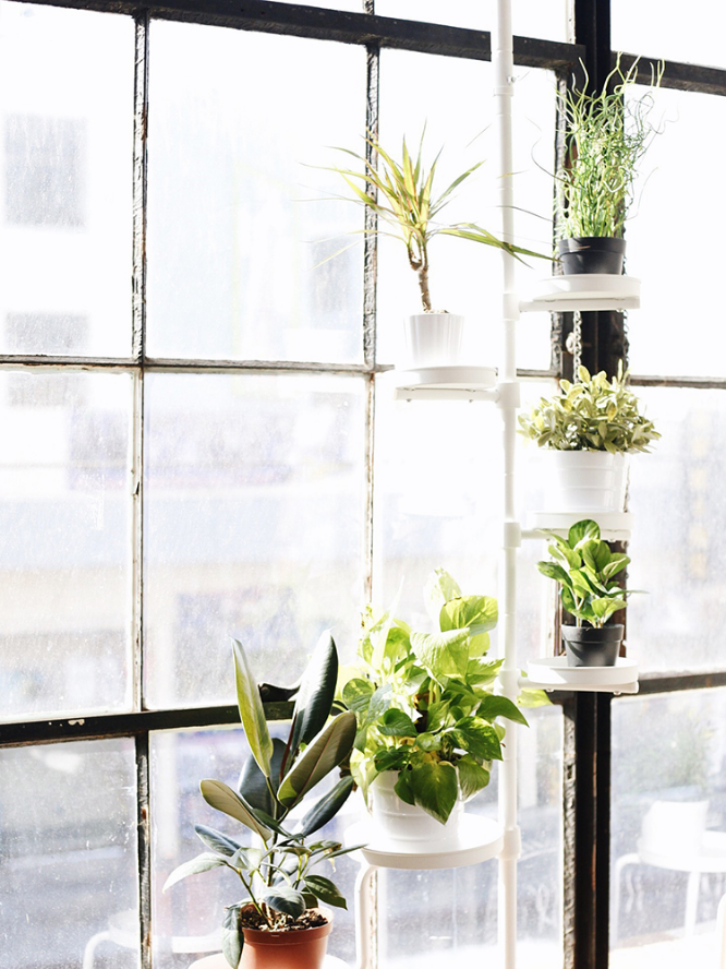 House plants and Three Things I Learned at Yellow Conference by @jessicaehowell via @social_studio