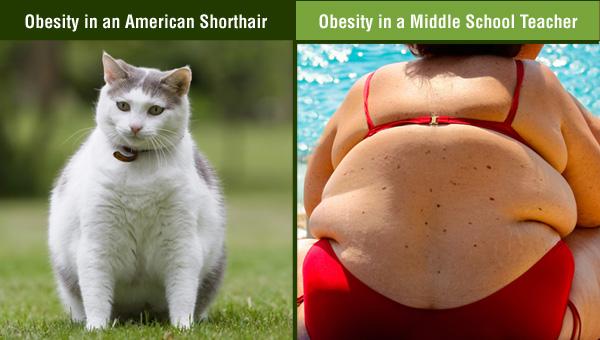 animal-human-panel-obesity.jpg
