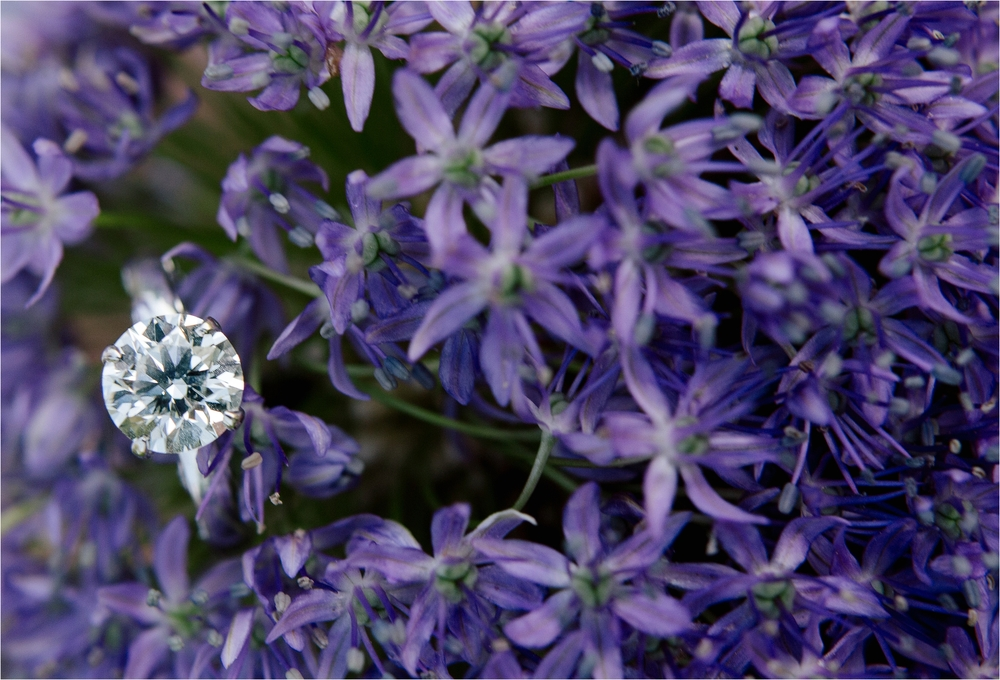 Meadowlark_Botanical_Gardens_Engagement_Session_Brandilynn_Aines_1855.jpg
