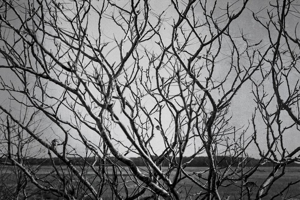Nature-bw6.5.jpg