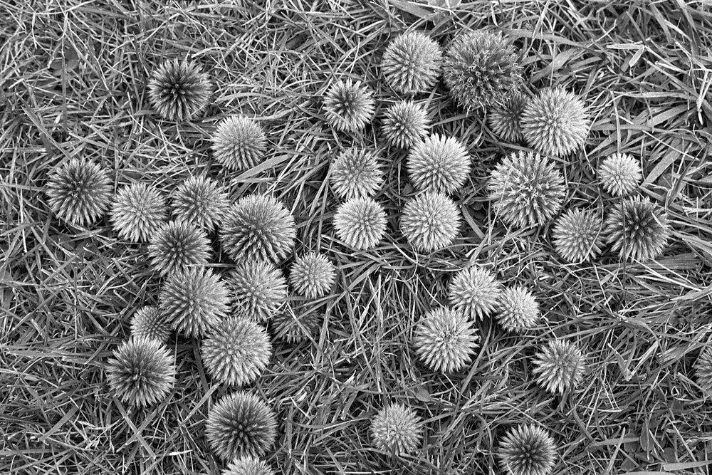 Nature-bw7.jpg