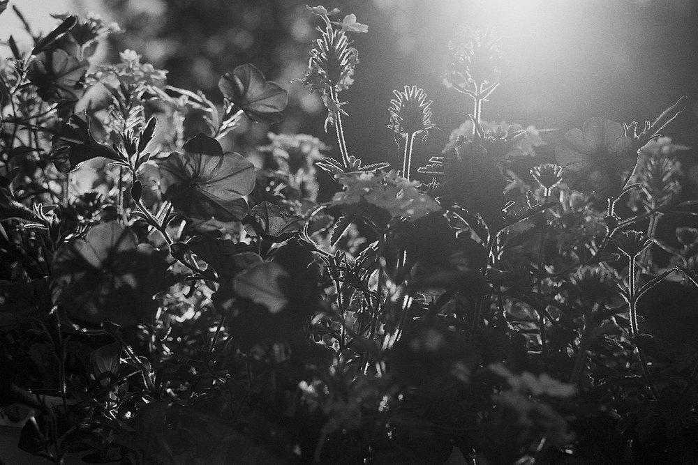 Nature-bw9.jpg
