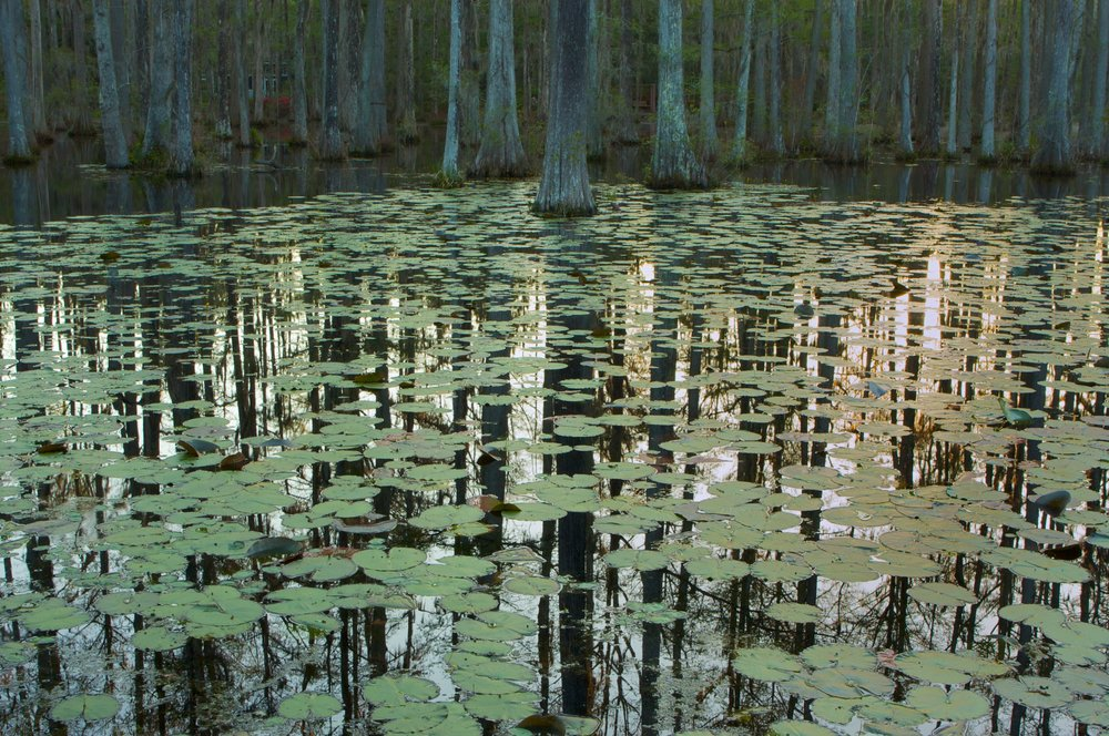 CypressGardens13.jpg