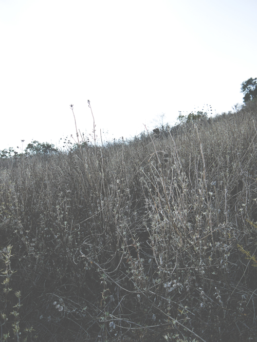 P1070593