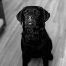 our dog 1.jpg