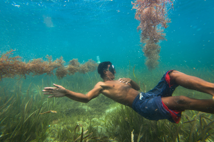 A Sama-Bajau man dives to check on his cultivated seaweed. Seedlings are tied to monofilament lines that float roughly one meter below the surface. There are a few varieties of seaweed which are cultivated ranging in color from brown to green.