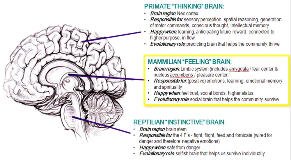 The Triune Brain