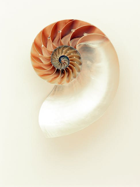spiral-shell.jpg