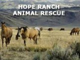 Ranch-Hope-Animal-Rescue-160x120.jpg