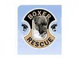 boxer-final-160x120.jpg