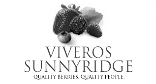 Sunnyridge Blueberries