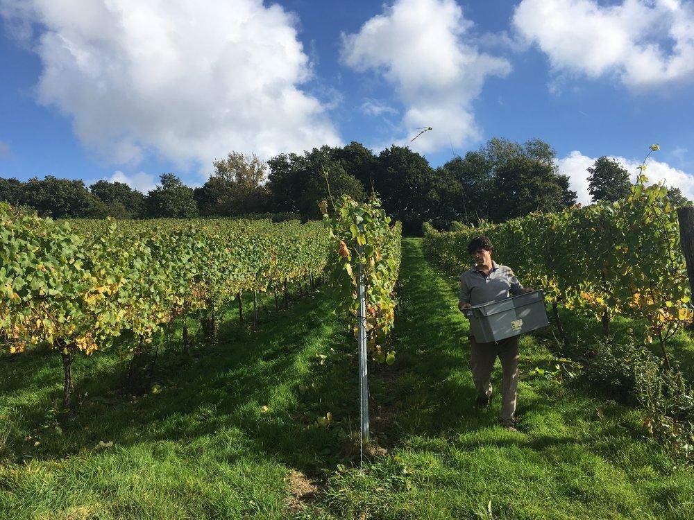 davenport vineyards sectormentor tech