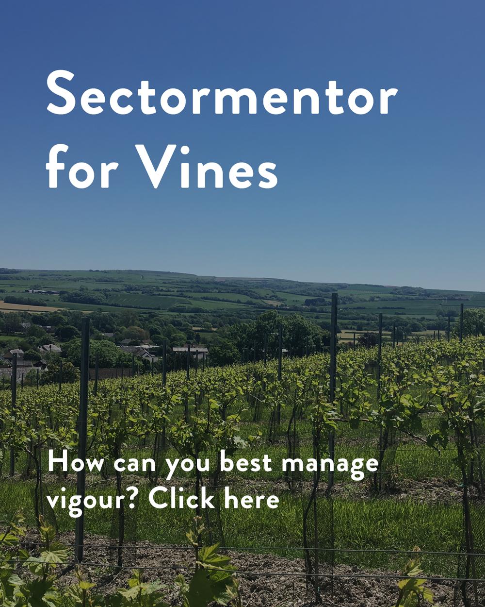 vines.sectormentor.com