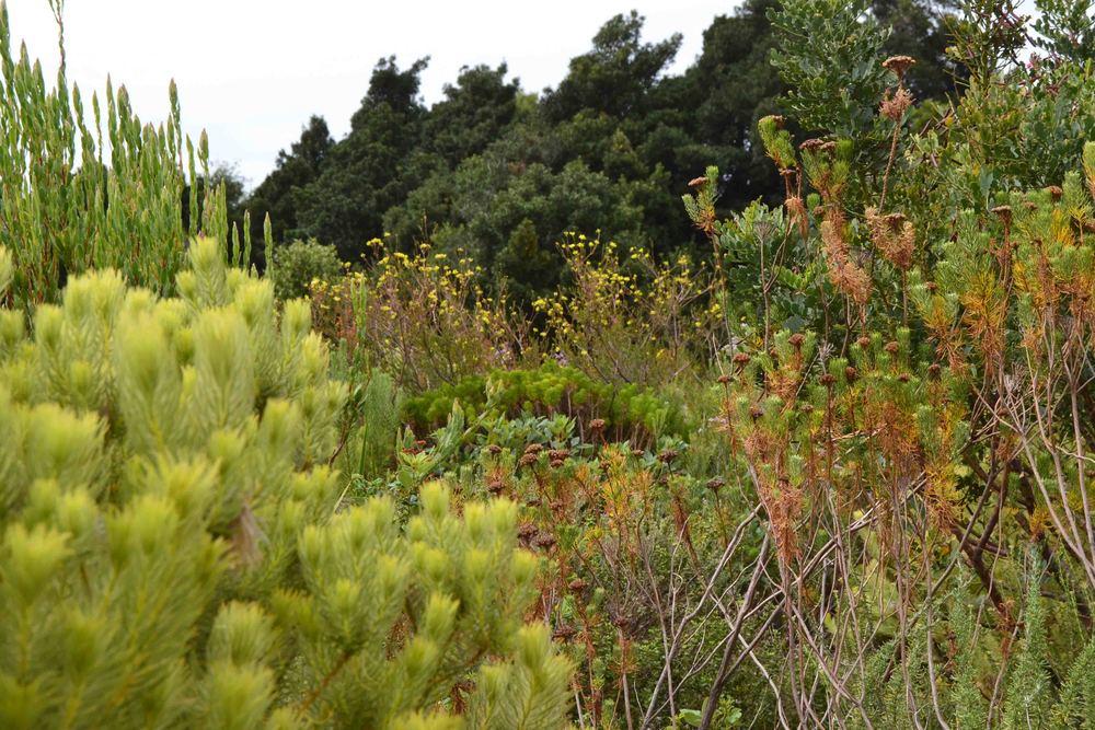 Sprout visits Harold Porter Botanical Gardens