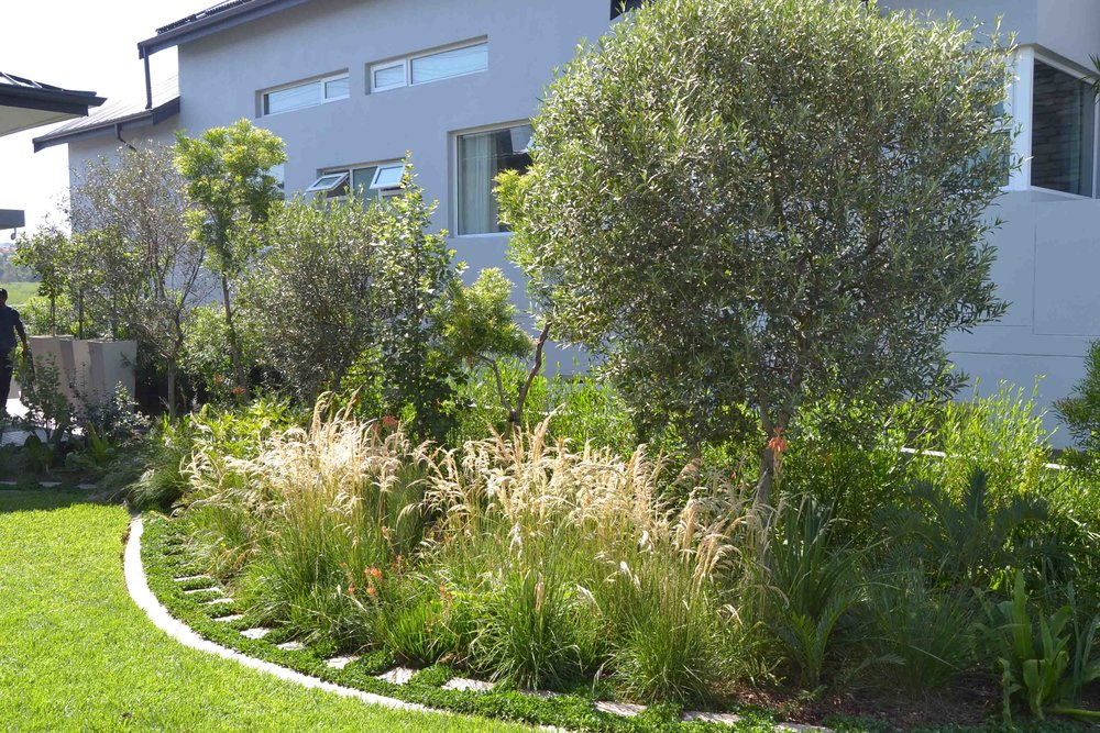 Indigenous Grasses with Cycads and Aloes. Trees screening neighbouring house.