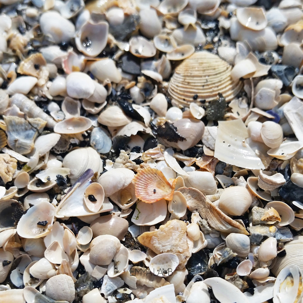 Tiny Treasures - white sea shells | Emma Lamb