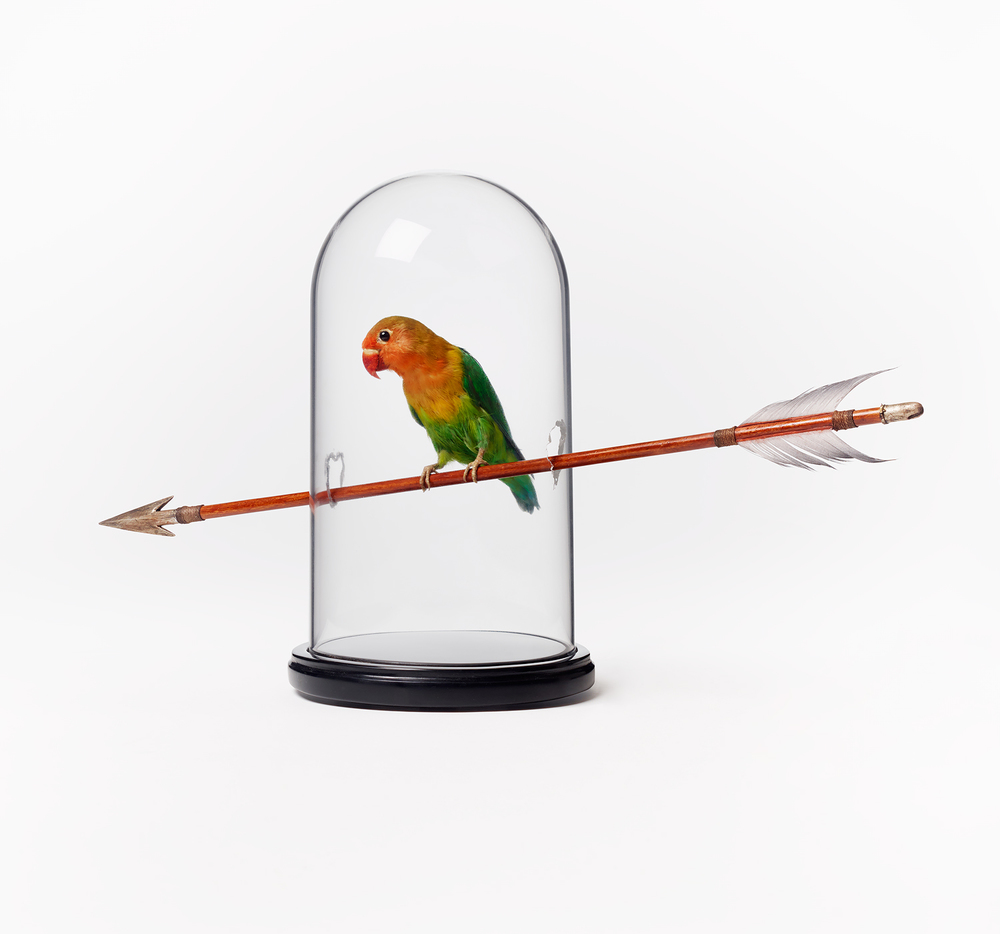 Bird on Arrow