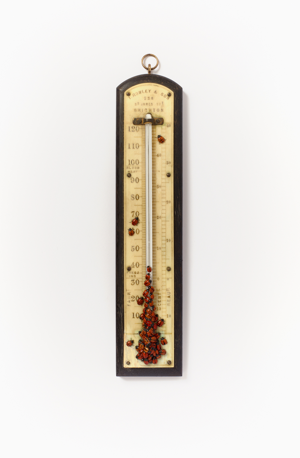 Thermometer with Ladybirds