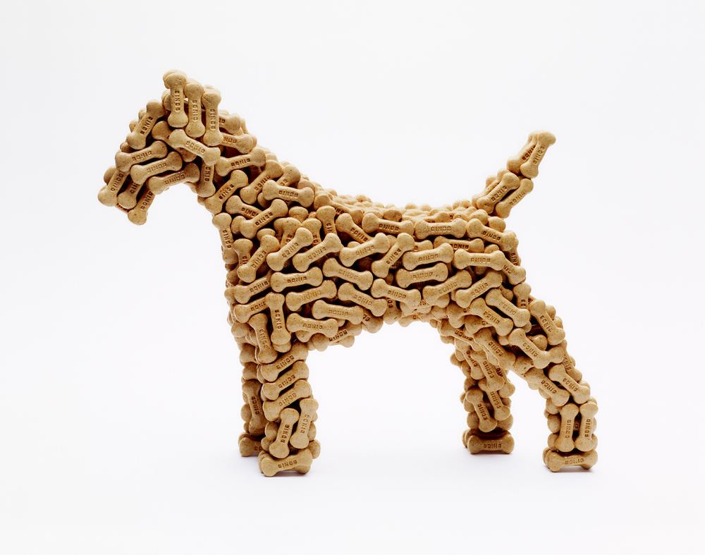 Dog Biscuit Dog