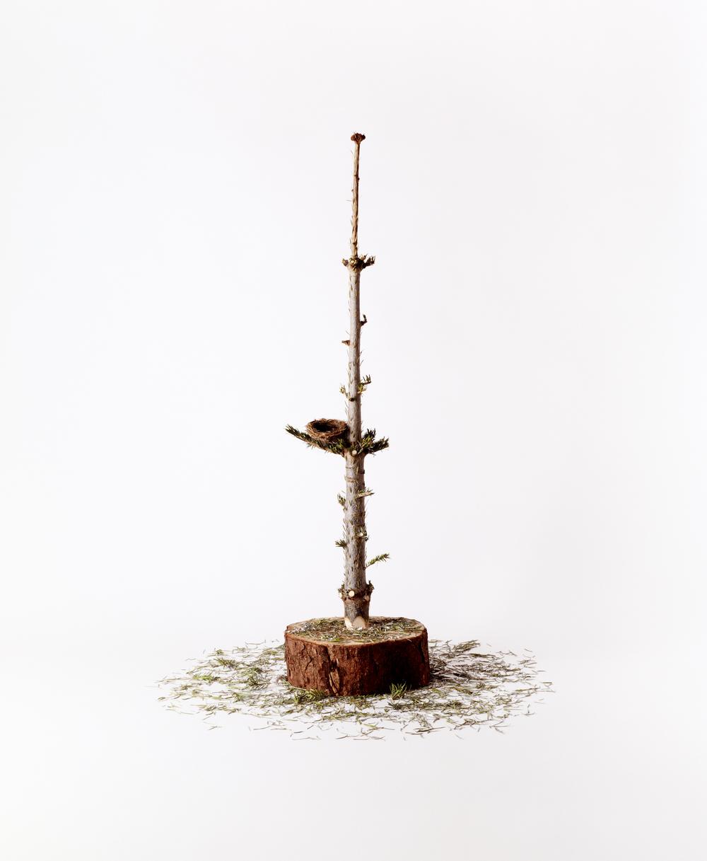 Tree nest