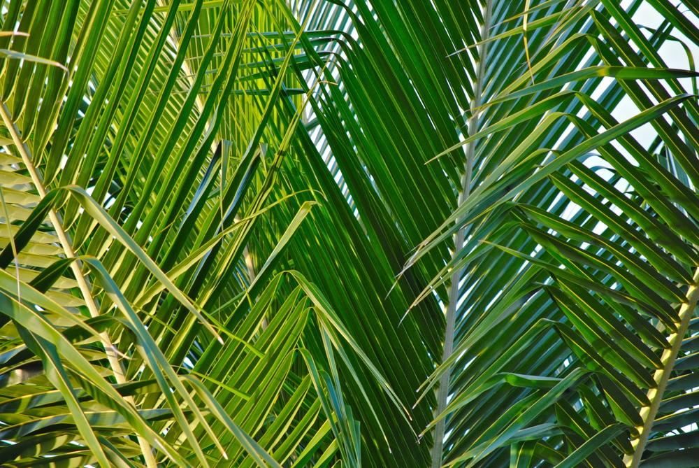 Flere palmer
