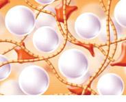 Collagen Stimulation Dermal Filler