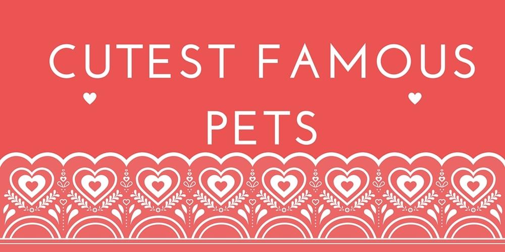 cutest famous pets
