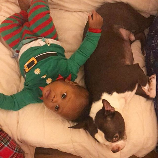 I'm new to this Christmas thing but I guess I could get used to the extra love. - Zayn . . . . . . #babiesofinstagram #babiesandpuppies #bostonterrier #blackboyjoy #blackmomsblog #nyckids #firstchristmas #rjandzayn #bloggerkids