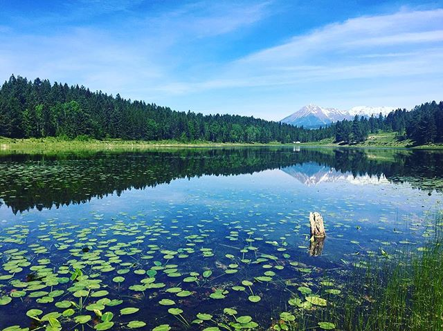 I guess I could get used to this... I ❤️ BC!  #mountainside #homeiswherethemountainsare #explorebc #lilypad #paintedturtles #i❤️bc #getoutside #adventuretime #thisisliving #mountainair #stephaniemooretravels #familytime