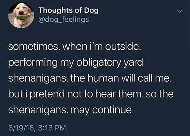 Ivy this morning #dogsofinstagram #shenanigans