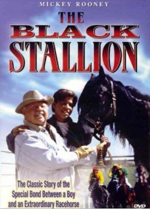 stallionJP.jpg
