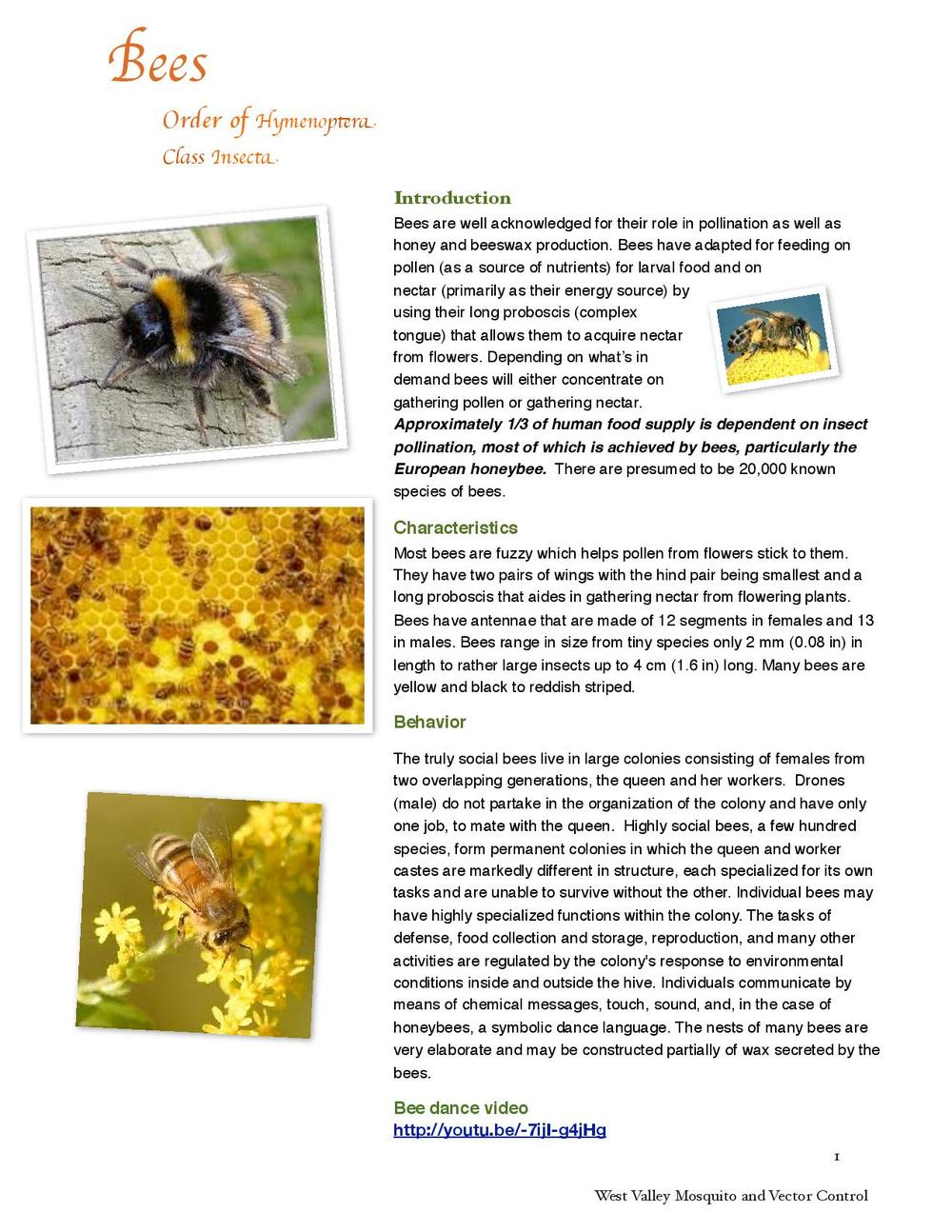 Bees-page-001.jpg