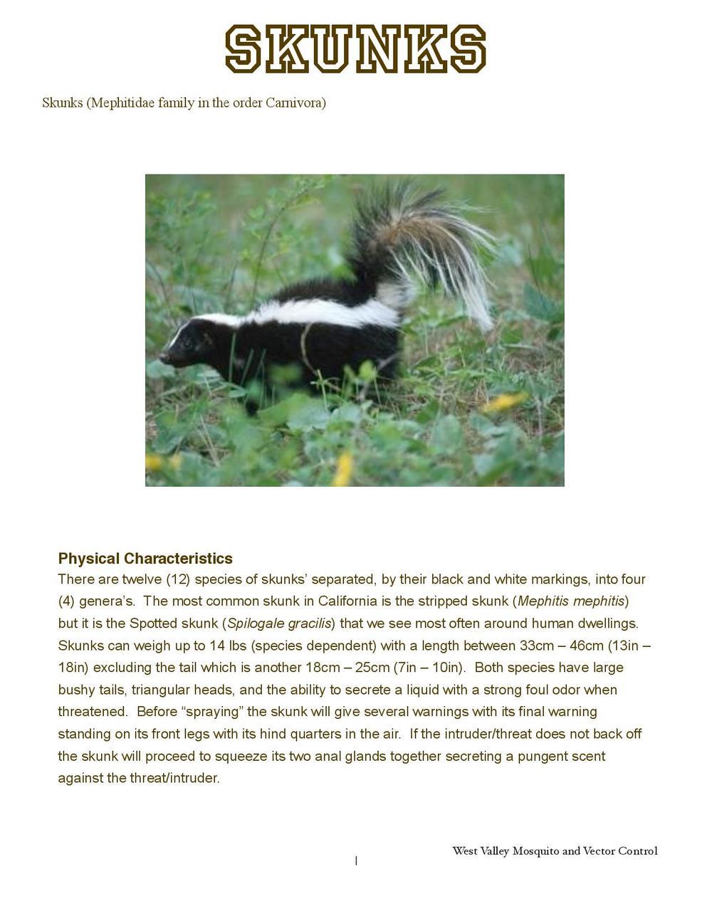 Skunks-page-001.jpg