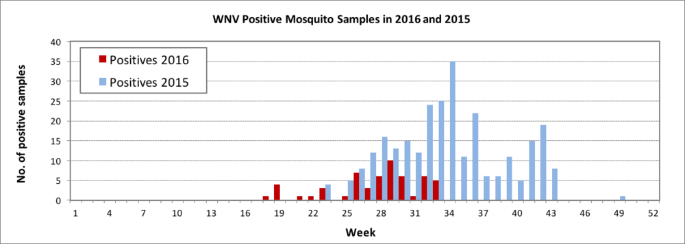 This chart shows the number of positive mosquito samples in 2016 versus the number positive in 2015 by week.