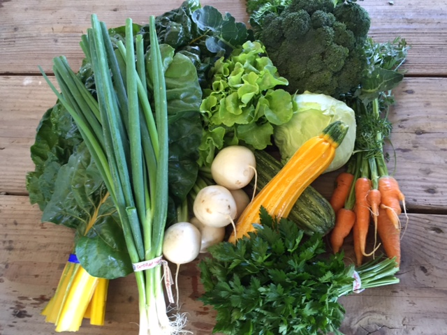 Week 2 CSA share pic.jpg