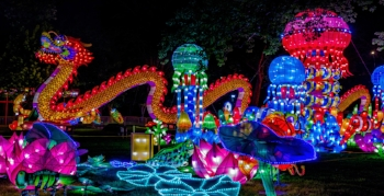 Chinese-Lantern-Festival-Dragon-Flowers-1280uw.jpg