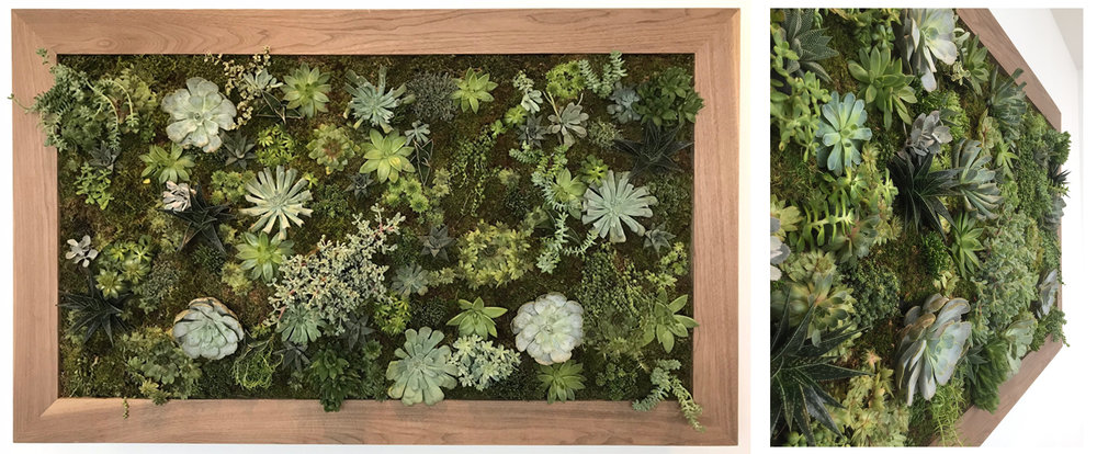 Custom made succulent wall garden