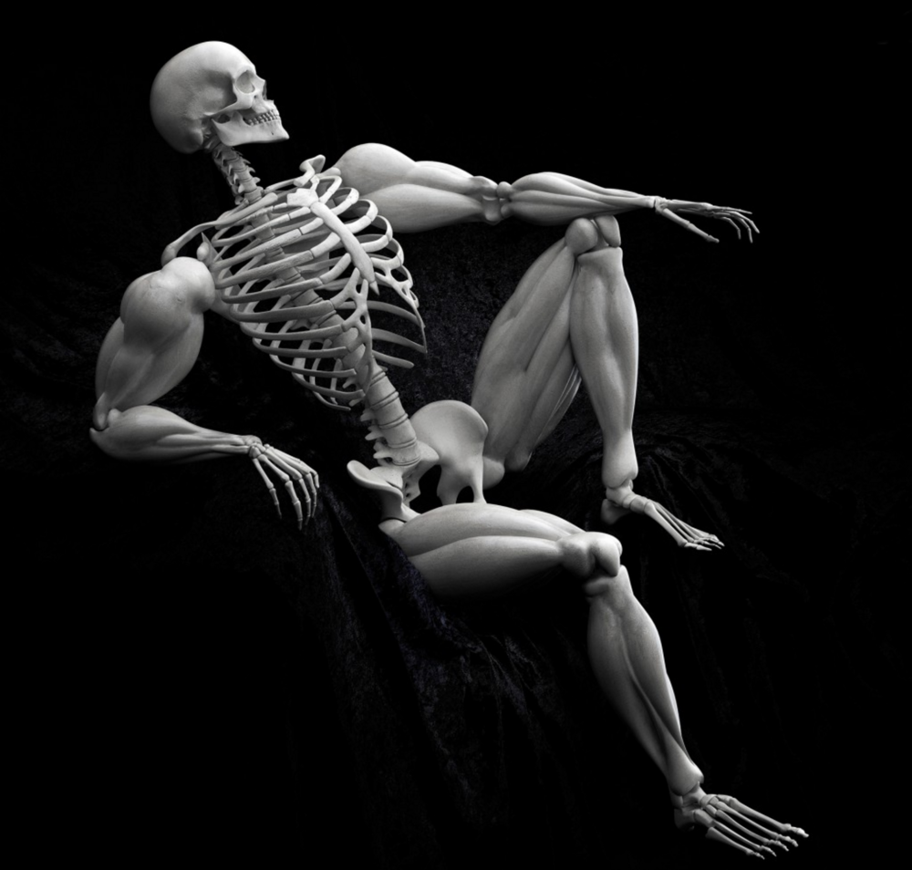 Skeleton muscles