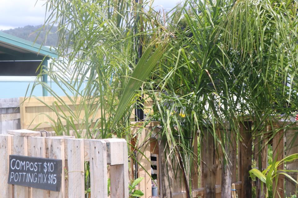 palmsgardenshed.jpg
