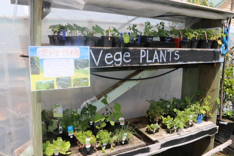 vegeplants.jpg