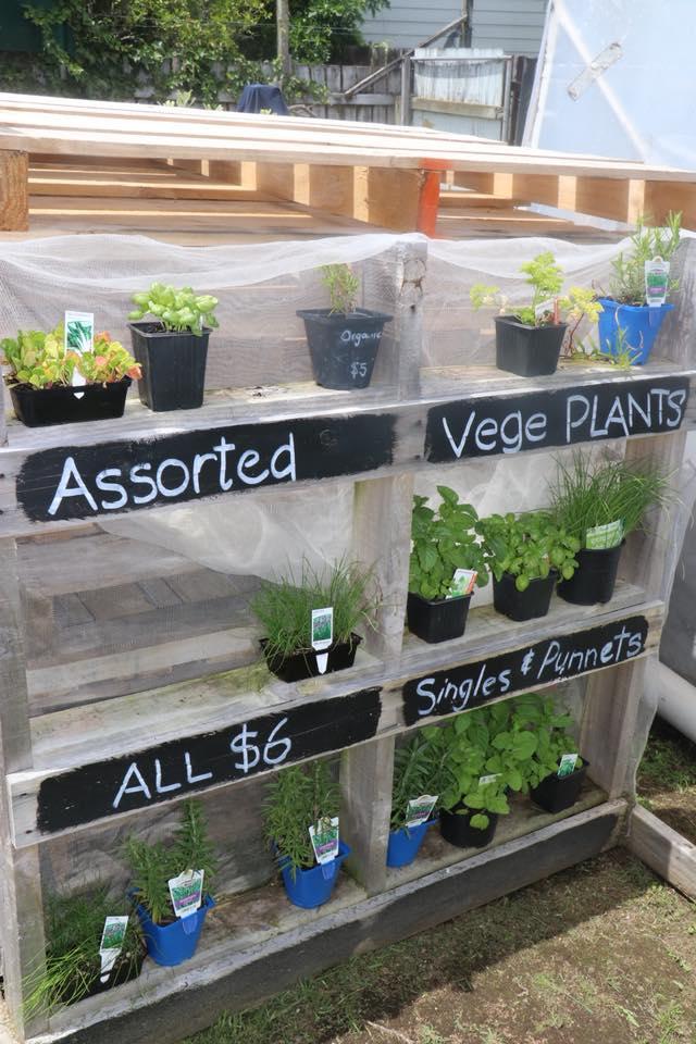 vegeplants_gardenshed.jpg