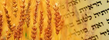 Harvest & Torah