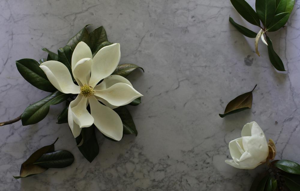 floral - magnolia.jpg