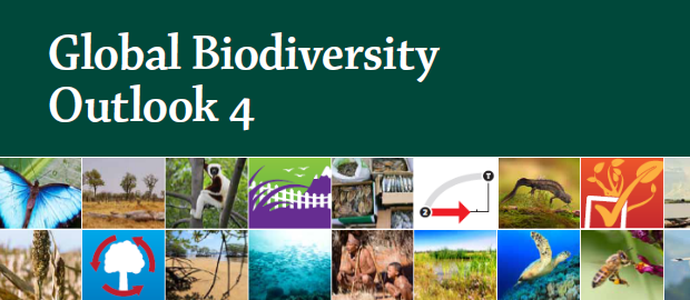 Published almost at the halfway point of the 2011–2020 Strategic Plan for Biodiversity, this fourth edition of the Global Biodiversity Outlook (GBO-4) provides a timely report: on progress towards meeting the 20 Aichi Biodiversity Targets and potential actions to accelerate that progress; on prospects for achieving the 2050 Vision on 'Living in Harmony with Nature'; and on the importance of biodiversity in meeting broader goals for sustainable human development during this century.